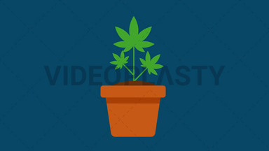 Marijuana Plant ANIMATION