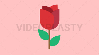 Rose ANIMATION