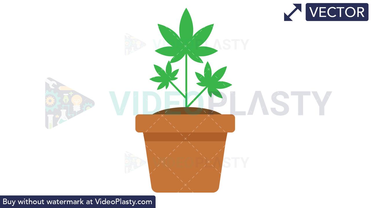 Marijuana Plant Vector Clipart